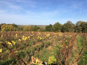 Herfst in de wijngaard